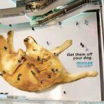 Accion-BTL--Perro-con-pulgas-en-centro-comercial