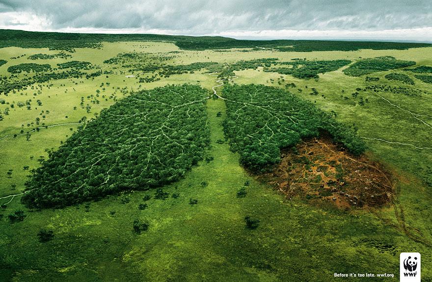 Anuncios sobre problemas sociales deforestacion