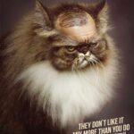 anuncios con gatos como protagonistas 1