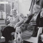 anuncios con gatos como protagonistas 13 - mclanfranconi