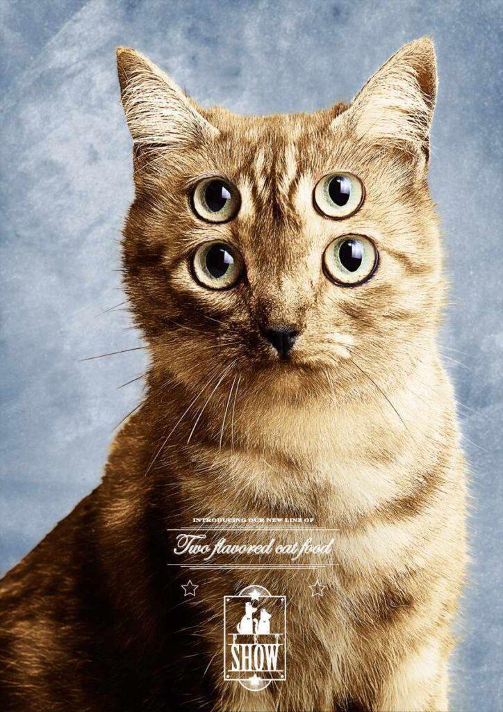 anuncios con gatos como protagonistas 16 - mclanfranconi