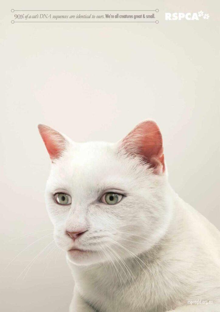 anuncios con gatos como protagonistas 18 - mclanfranconi