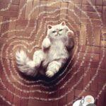 anuncios con gatos como protagonistas 19 - mclanfranconi
