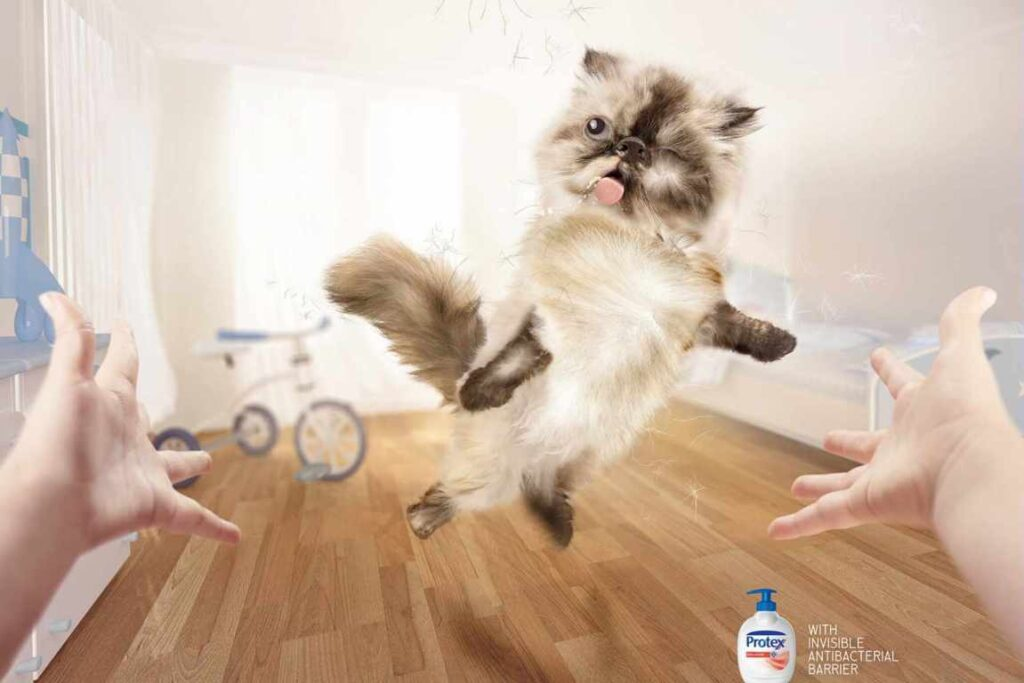 anuncios con gatos como protagonistas 20 - mclanfranconi