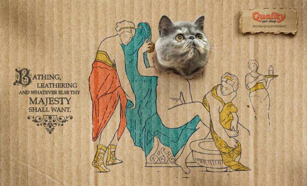 anuncios con gatos como protagonistas 3 - mclanfranconi