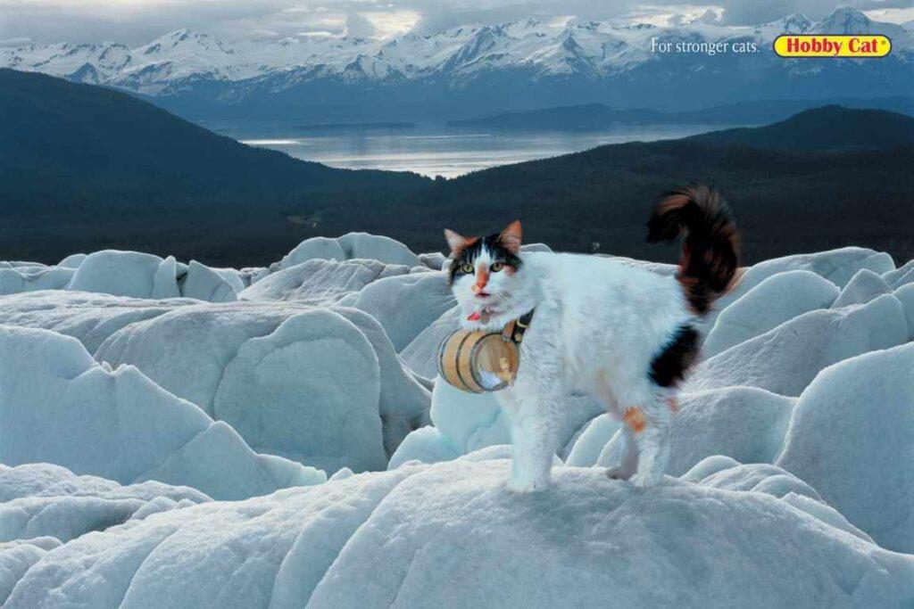 anuncios con gatos como protagonistas 6 - mclanfranconi