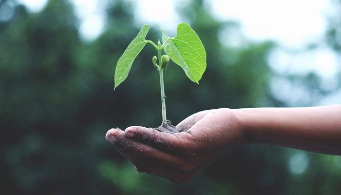 cosecharas tu siembra el dinero es una semilla