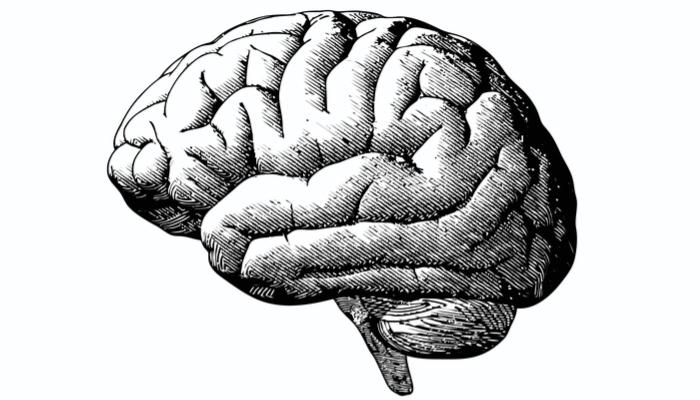 cuanto vale tu cerebro 2